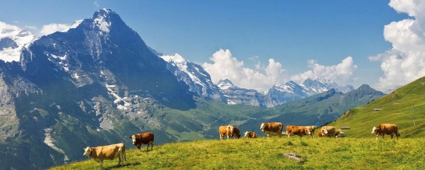 Ab auf die ALM: Unsere BIO-Kühe starten die Sommerfrische